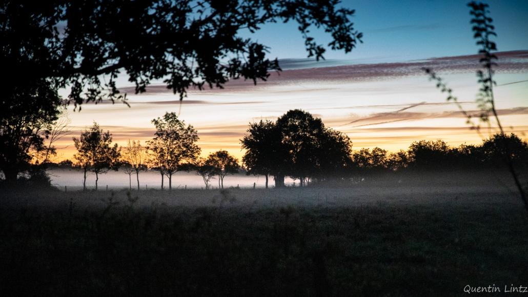 paysage au petit matin
